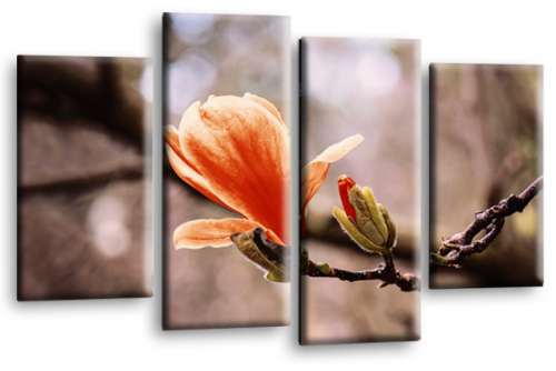 Floral Flower Wall Art Picture Grey Orange Spring Print